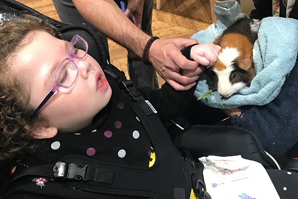 child stroking guinea pig