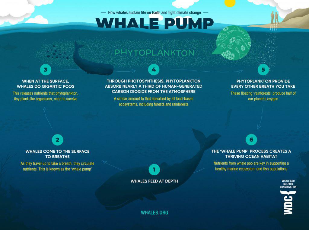 whale pump blog image