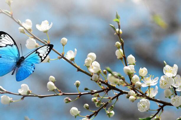 testimonial David butterfly
